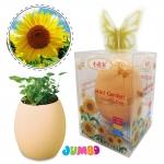 MN038 EGG MINI GARDEN JUMBOชุดของขวัญ ปลูกต้นไม้ Sunflower(ดอกทานตะวัน)